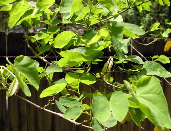 leaves tr.jpg