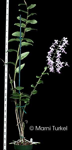 oers.pj.plant.jpg