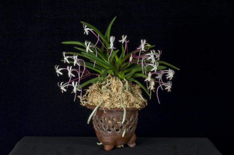 Plantes étonnantes (ou belles ou intéressantes ou marrantes ou ce que vous voulez) - Page 2 40657_b6bf5a006938ca3ba4c1ac67273aeed1