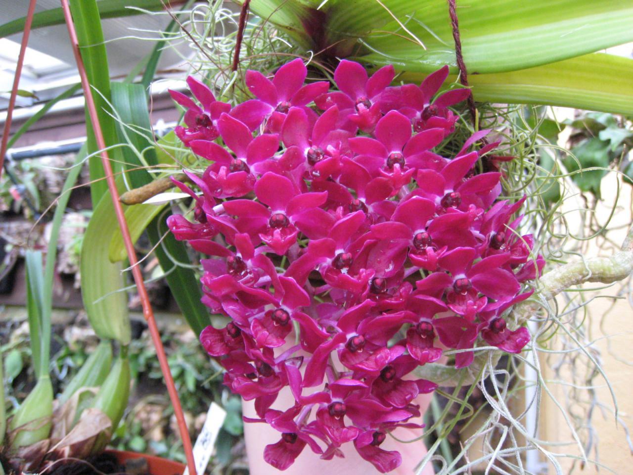 awww.orchidees.fr_forums_gallery_1293979243_gallery_6011_1067_296397.jpg