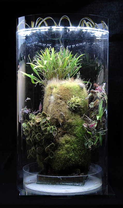 Nano Vivarium With New Led Light on growing orchids in fish tank