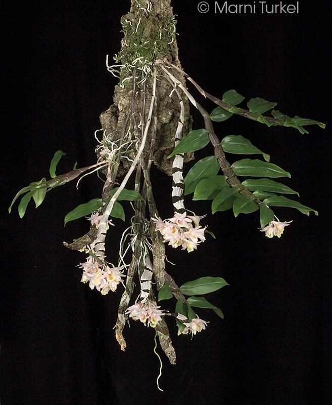 d.speckmaieri.plant.jpg