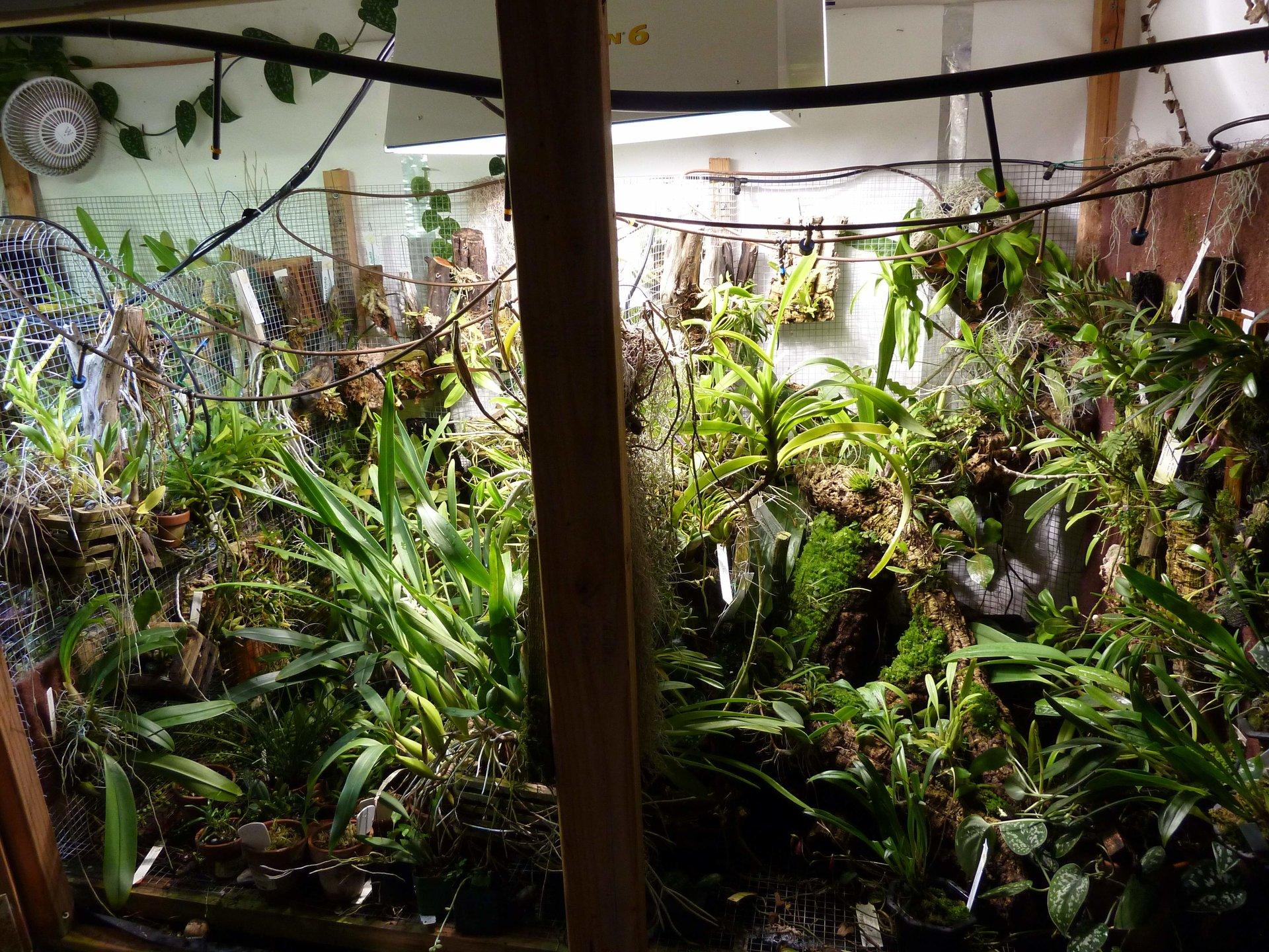 my orchidarium basement greenhouse orchids forum