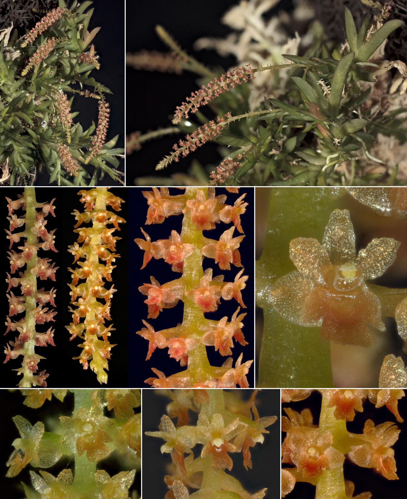 japonica-color1 copy.jpg