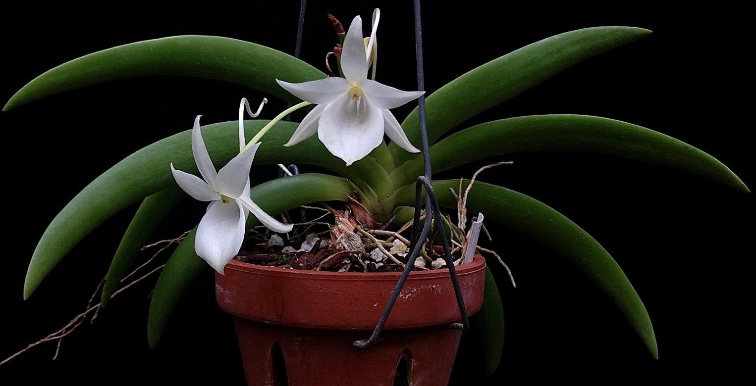 leonisplant0120.jpg