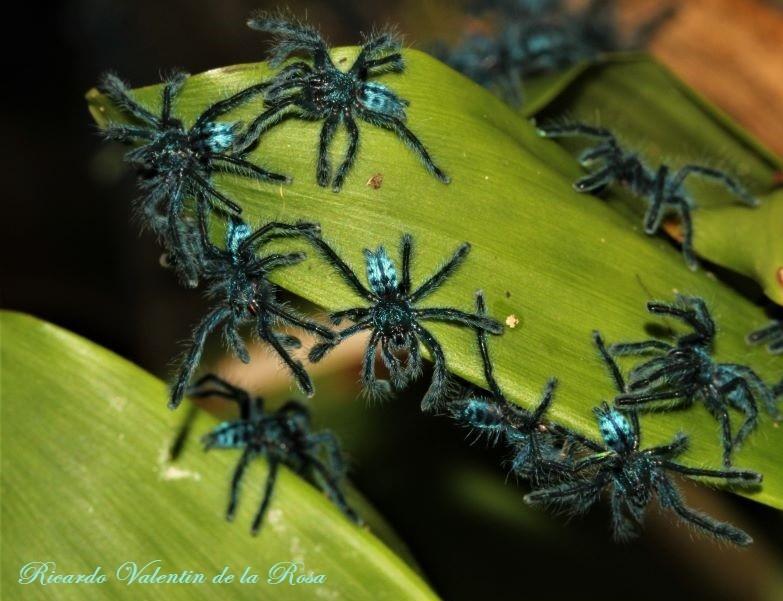 spiders1 (2).jpg