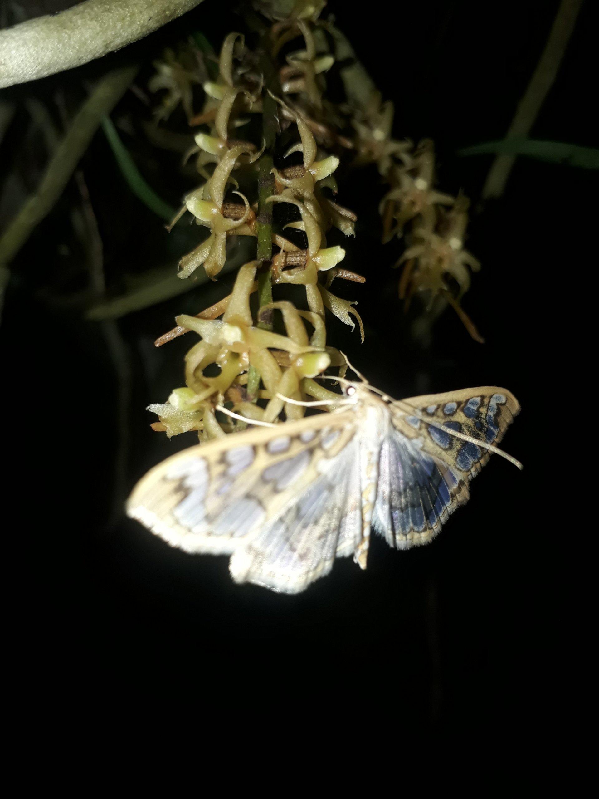 T f pollinator.jpg