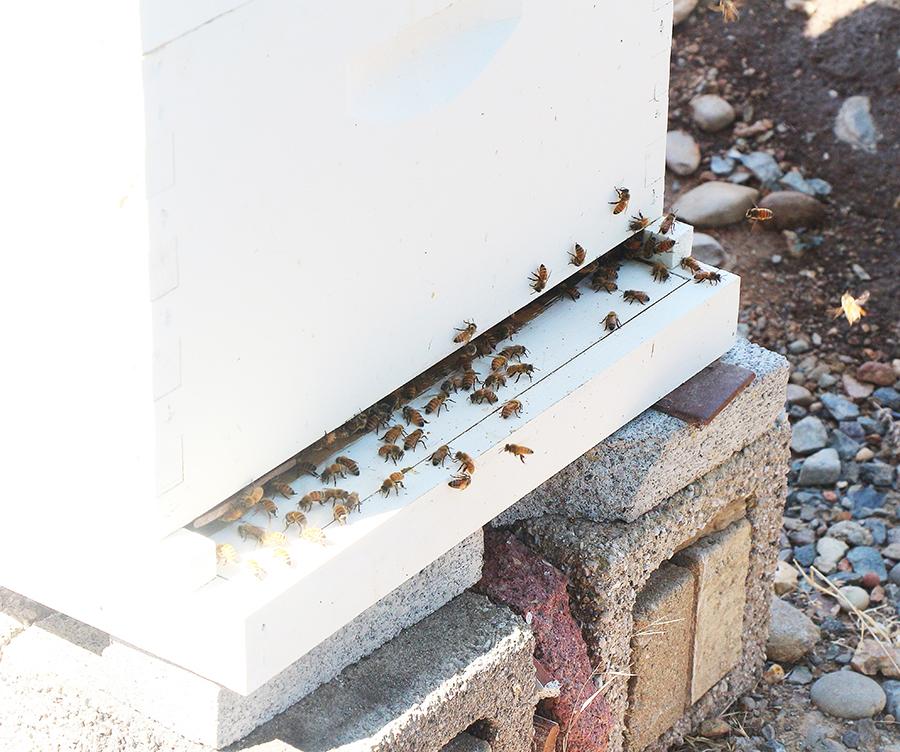 Hive1-900.jpg