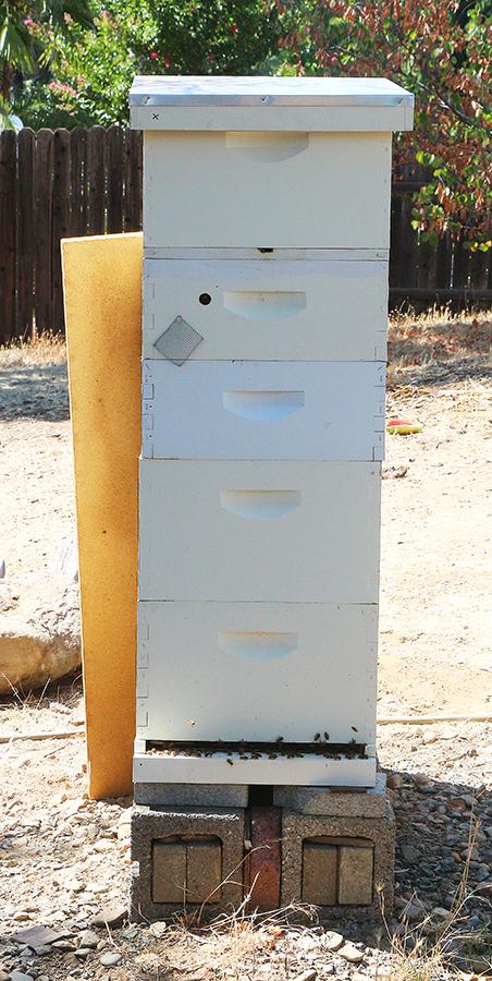 Hive2-900.jpg