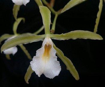 peruvianaclose0121.jpg