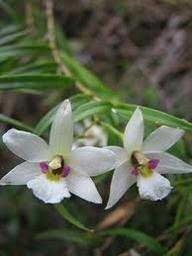 kiwiorchidkid
